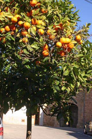 阳光下风景果树照片
