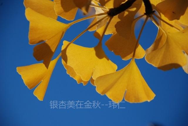 秋天树枝摇动动图