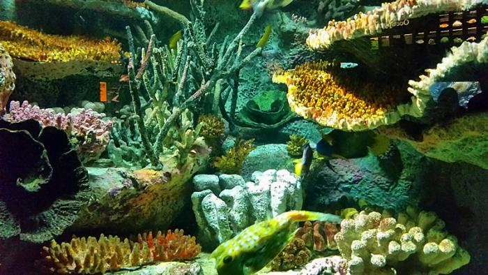 壁纸 海底 海底世界 海洋馆 水族馆 700_394